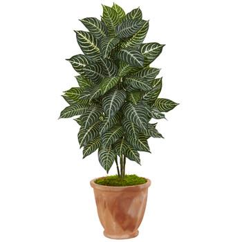 42 Zebra Plant in Terracotta Planter - SKU #6319