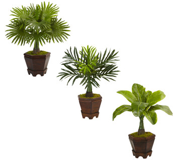 Assorted Mini Palm Trees in Planter Set of 3 - SKU #6325-S3