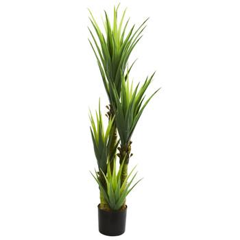 4.5 Dracaena Plant - SKU #6343