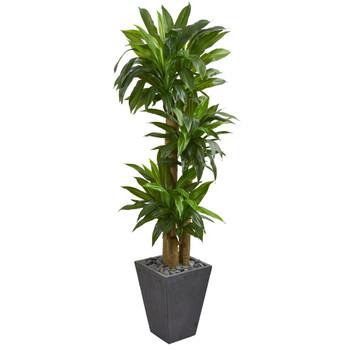 5.5 Cornstalk Dracaena Artificial Plant in Slate Planter Real Touch - SKU #6437