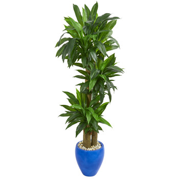 6 Cornstalk Dracaena Artificial Plant in Blue Planter Real Touch - SKU #6442