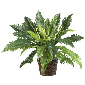 Marginatum w/Wicker Basket Silk Plant - SKU #6534