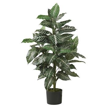 3 Zebra Silk Plant - SKU #6542