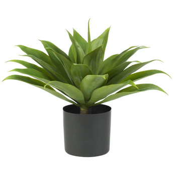 Agave Silk Plant - SKU #6565