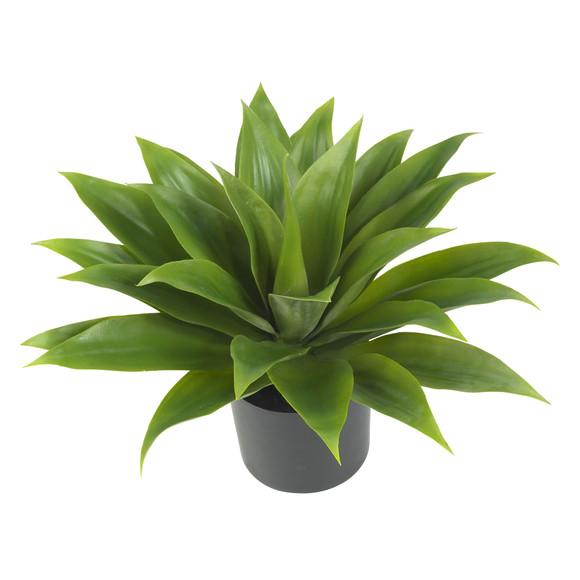 Agave Silk Plant - SKU #6565 - 1