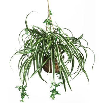 Spider Hanging Basket Silk Plant - SKU #6607