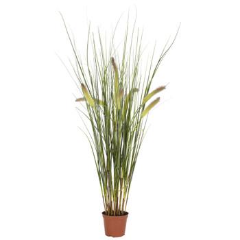 2.5 Grass Plant - SKU #6647