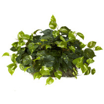 Pothos Ledge Plant Set on Foam Silk Plant - SKU #6708
