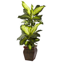 Golden Dieffenbachia w/Decorative Planter - SKU #6731