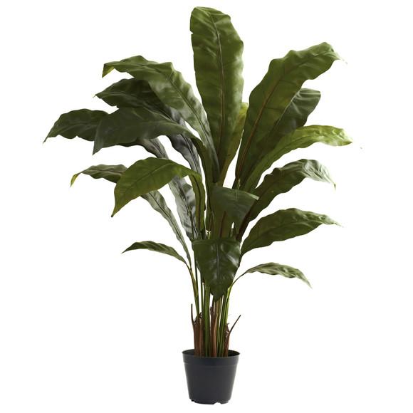 3.5 Birdsnest Plant - SKU #6739