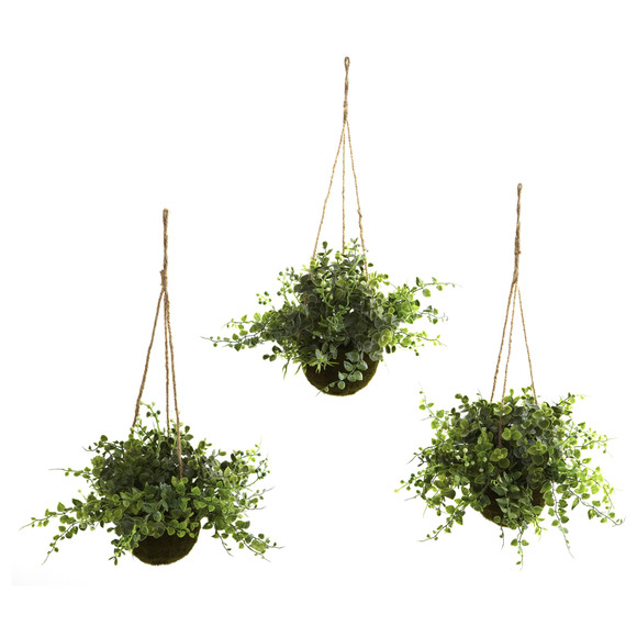 Eucalyptus Maiden Hair Berry Hanging Basket Set of 3 - SKU #6741-S3