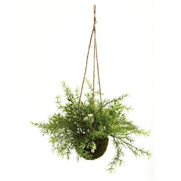 Ruscus Sedum Springeri Hanging Basket Set of 3 - SKU #6742-S3 - 1