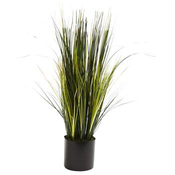 3 Onion Grass Plant - SKU #6766