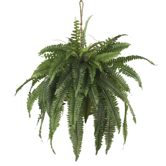 Large Boston Fern Hanging Basket - SKU #6774