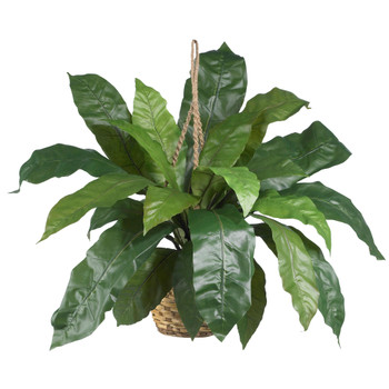 Large Birds Nest Fern Hanging Basket - SKU #6775