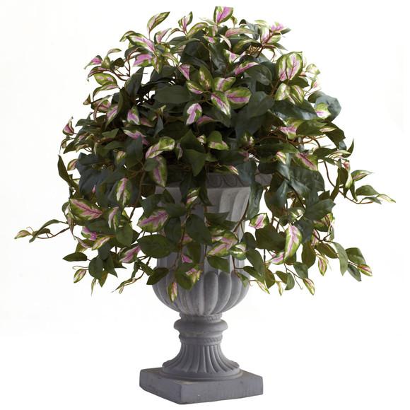 Hoya with Decorative Urn - SKU #6782