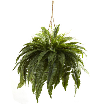 Double Giant Boston Fern Hanging Basket - SKU #6788