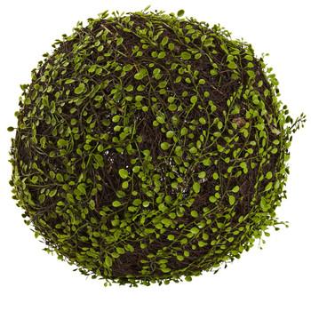15 Dia. Mohlenbechia Ball - SKU #6806