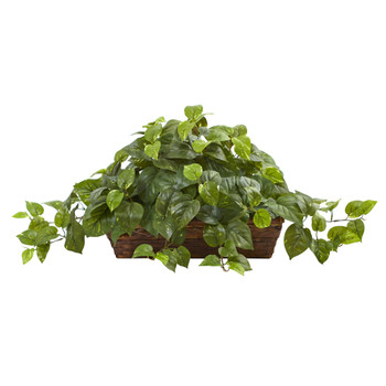 Pothos w/Ledge Basket - SKU #6818