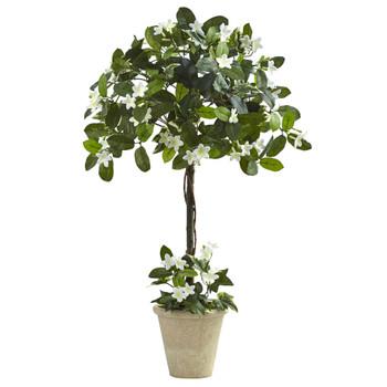 3 Stephanotis Topiary w/Planter - SKU #6820