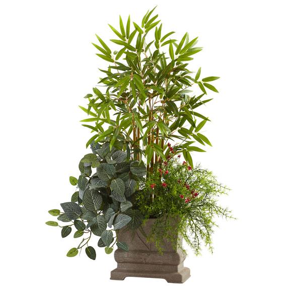 38 Mixed Mini Bamboo Fittonia Springeri w/Planter - SKU #6826