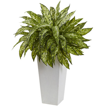 Aglaonema with White Decorative Planter - SKU #6836