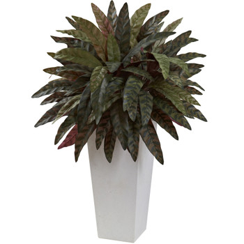 Peacock Plant with White Planter - SKU #6841