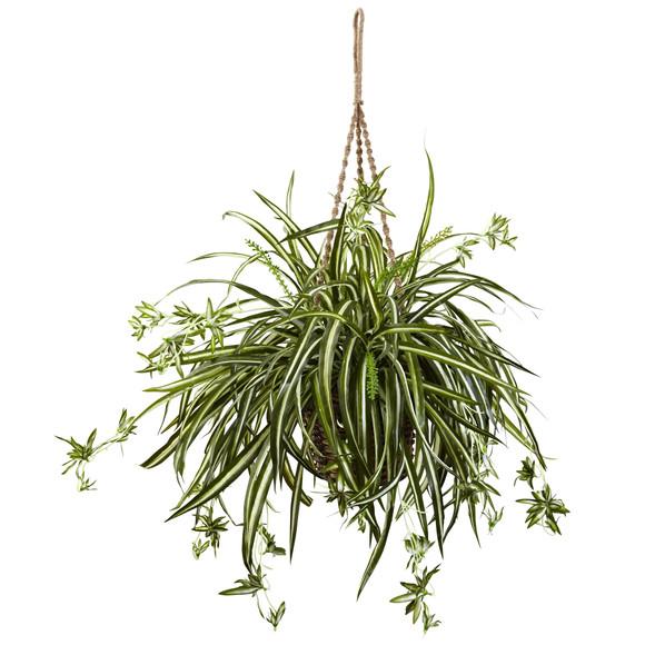 Spider Plant Hanging Basket - SKU #6846