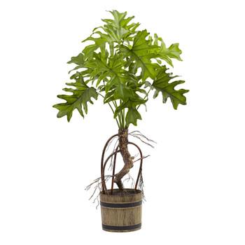 Split Philo Plant w/Bucket Planter - SKU #6858