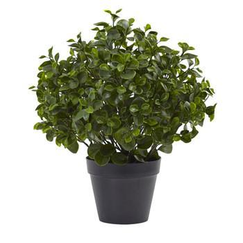 23 Peperomia Plant UV Resistant Indoor/Outdoor - SKU #6859