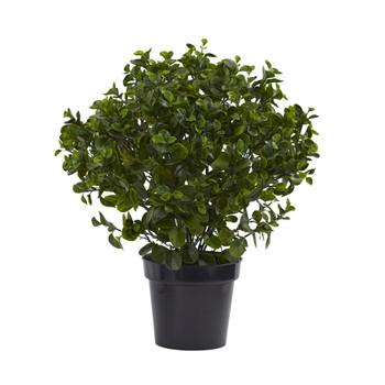 28 Peperomia Plant UV Resistant Indoor/Outdoor - SKU #6860