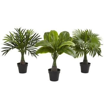 Areca Fountain Banana Palm Set of 3 - SKU #6867-S3