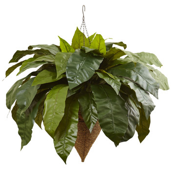 Giant Birds Nest Fern with Cone Hanging Basket - SKU #6870