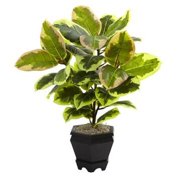 Variegated Rubber Leaf with Planter - SKU #6886