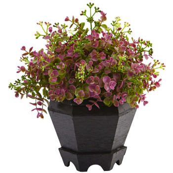Sedum and Eucalyptus Plant with Planter - SKU #6891