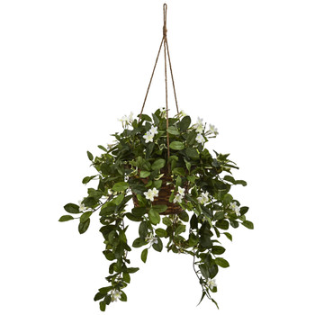 Mixed Stephanotis Hanging Basket - SKU #6913