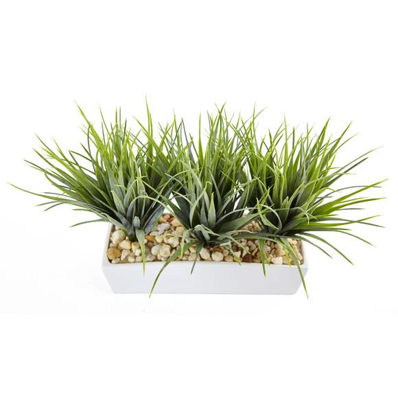 Vanilla Grass in Rectangular Planter - SKU #6915 - 1