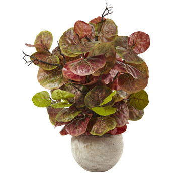 Seagrape Plant in Sand Colored Bowl - SKU #6928