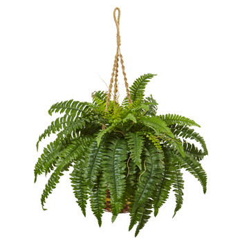 Boston Fern Hanging Basket - SKU #6930