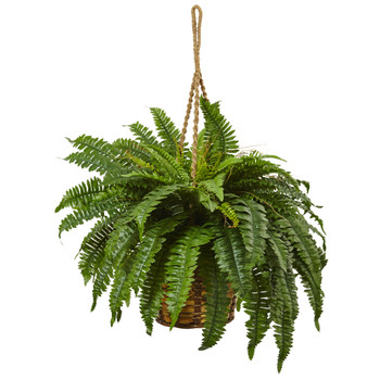 Boston Fern Hanging Basket - SKU #6931