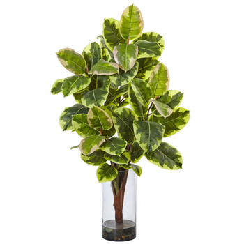 Rubber Plant in Glass Cylinder - SKU #6939