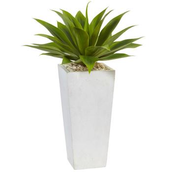 Agave in White Planter - SKU #6950