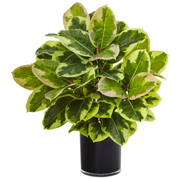 Rubber Plant in Glossy Cylinder Real Touch - SKU #6952