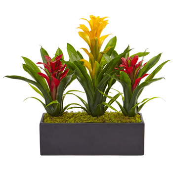 Bromeliads in Rectangular Planter - SKU #6954-YR