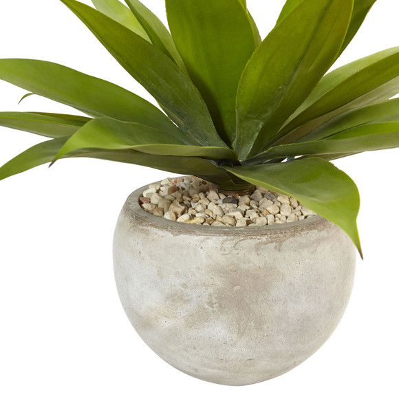 Agave in Sand Colored Bowl - SKU #6959 - 1