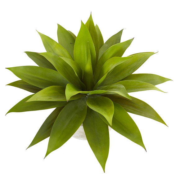 Agave in Sand Colored Bowl - SKU #6959 - 2