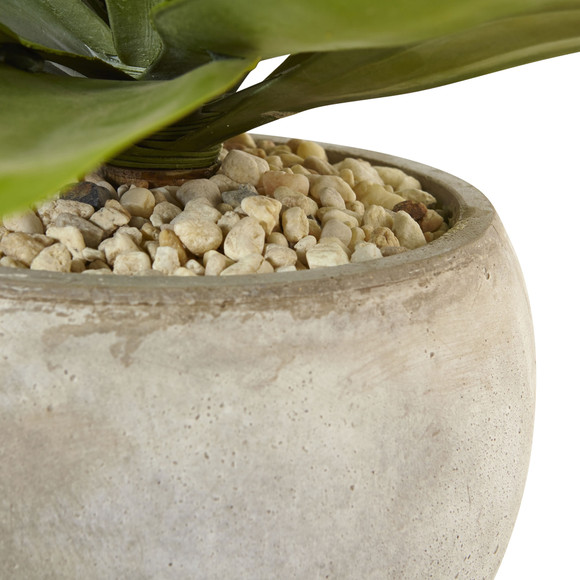 Agave in Sand Colored Bowl - SKU #6959 - 3