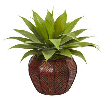 Agave Succulent in Weave Planter - SKU #6961