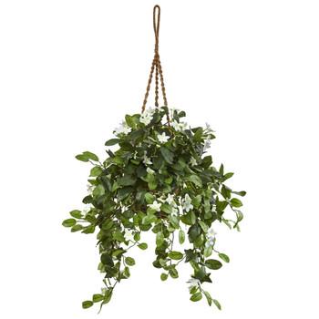 Stephanotis in Hanging Basket - SKU #6985