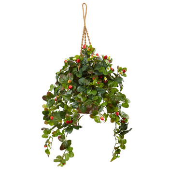Strawberry Bush in Hanging Basket - SKU #6987
